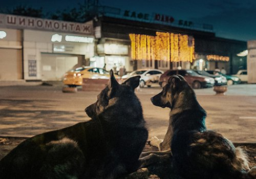 achtung berlin: Space Dogs