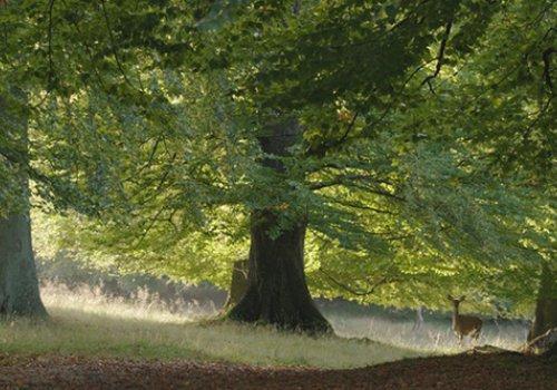 Kinderwagenkino: Das geheime Leben der Bäume
